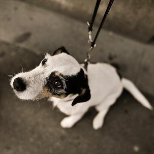 Dog stories I | Nils Holgersson