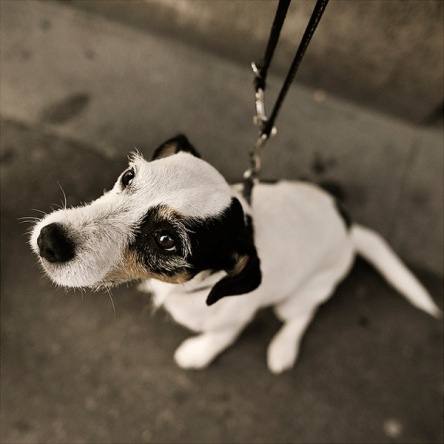Dog stories I   Nils Holgersson
