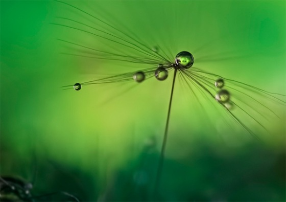 Green, Heidi-Westum