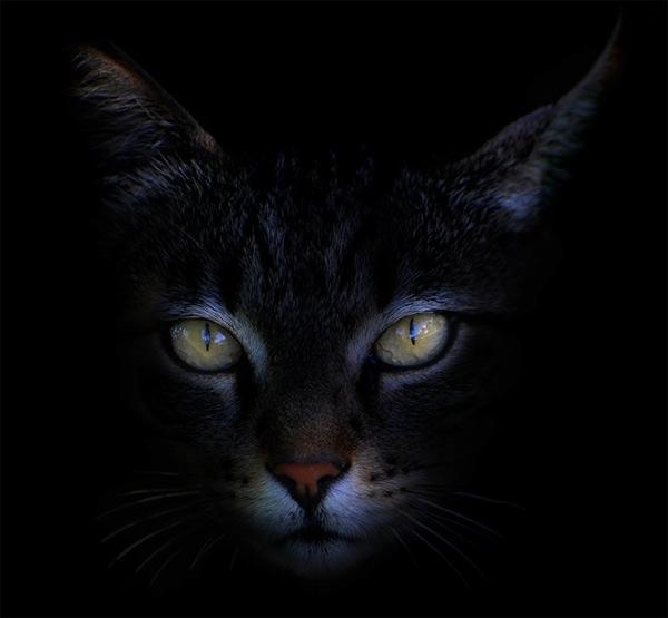 Feline, Antonio-Grambone-05